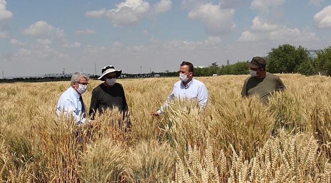 KGTÜ'nün geliştirdiği milli tohumlar toprakla buluşacak