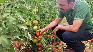 Konya, Türkiye'nin Gıda Güvenliğini Sağlıyor